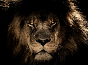 mana lion